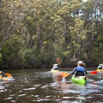 Kayaking the Ansons River