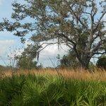 Short trail Disney Wilderness Preserve