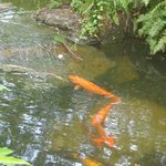 lindo cenário de peixes