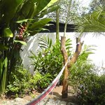 The side yard with hammocks for relaxing
