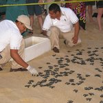 Gracias amigos for looking after the turtles.