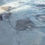 Stingrays on the beach