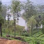 View from a Tea Plantation