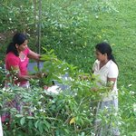 Staff gathering blossoms for bedroom decorations