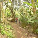 small plantation near hotel
