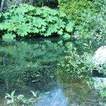 Gunnera surrounding the lake