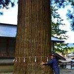 tree huggin the massive cypress!