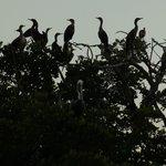 Birds Roost