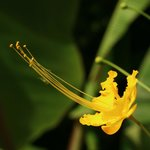 Sojourn Flower