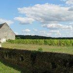 Château de Pimpéan vineyard