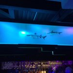 Live shark tank at bar