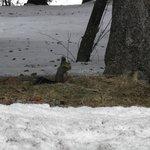 Pour l' écureuil aussi c'est la pause déjeuner