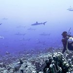 Fakarava diving & topside attractions