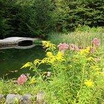 Pond & Garden