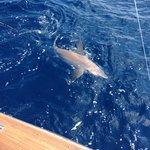 Our 200lb bull shark