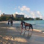 horsrs swimming on hotel beech