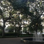 Live Oaks in the Square