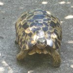 Foto de Kwalucia Private Safari Retreat
