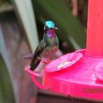 La Paz Hummingbird area