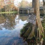 Swampy's tree sign along the Rainbow River