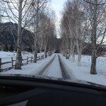 Birch tree lined drive