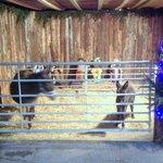 Living Farm Nativity
