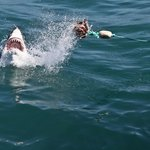 shark Diving (nothing to be scared of. Sharks are just beautiful)