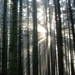 Eerie light patterns amongst the trees
