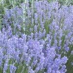 Bella Vista Idaho Foto