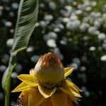 Photo of Botanical Park & Gardens Of Crete