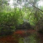 tunnel de mangroves