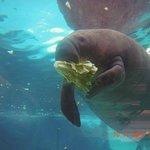 Not from the Park: Mote Aquarium, Sarasota, FL