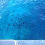 Lots to see when snorkeling