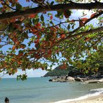 Schatten spendender Baum am Strand