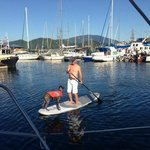 Paddle Board in Gibsons Harbour