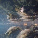 Feeding Turtles #IslandTimeKayakingTours