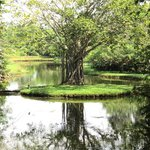 Nestled within the lake is the 'Deva Island' with its watchful Bodhi tree...