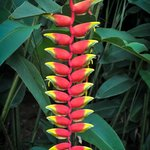 """""""Weird plant"""", Peradeniya, Sri-Lanka, 2013-09-05"""