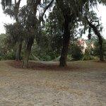 Hammock near treehouse