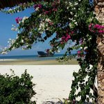desolate ship beyond heaps of bouganvillea