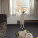Duke looking out the window at the Helgeson Hotel