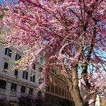 Spring in Piazza Risorgimento