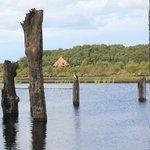 Peatland Biodiversity Walk in Lullymore Heritage Park