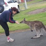 The best place to see Kangaroo nearby!!!
