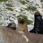 Sea Lions at Cabo Pulmo