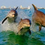 Dolphins ride