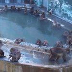 函館市熱帯植物園の猿