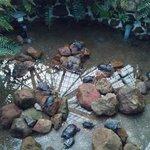 函館市熱帯植物園の亀