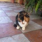 Il gatto di casa (simpaticissimo)