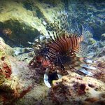 Lionfish at Batok Bay